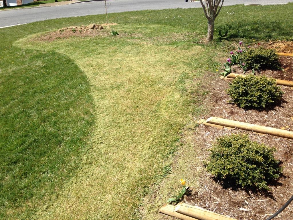 shorn grass for flower bed