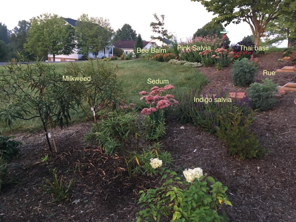 annotated-garden_0168