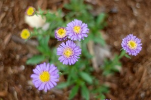 aster_0010
