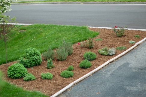 herb bed_0042