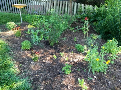 Back bed, with newly transplanted goldenrod