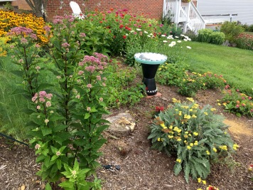 Joe Pye weed and front bed (and sailboat)