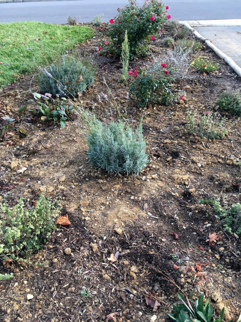herb garden above view 2884