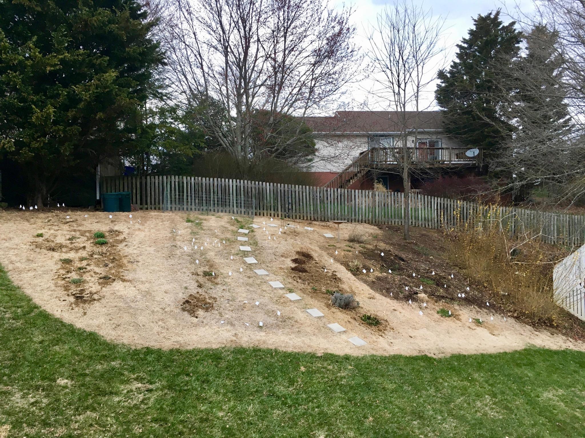 back hill before mulch