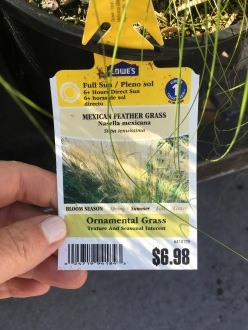 Mexican feather grass tag