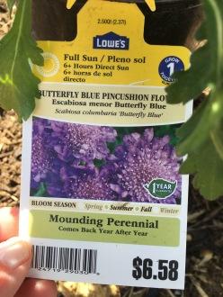 Scabiosa plant tag