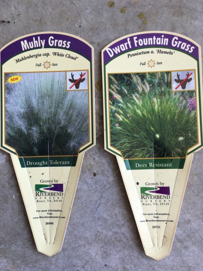 White muhly and dwarf fountain grasses
