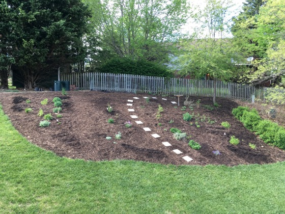 Back bed: dark patches are newly sown seeds
