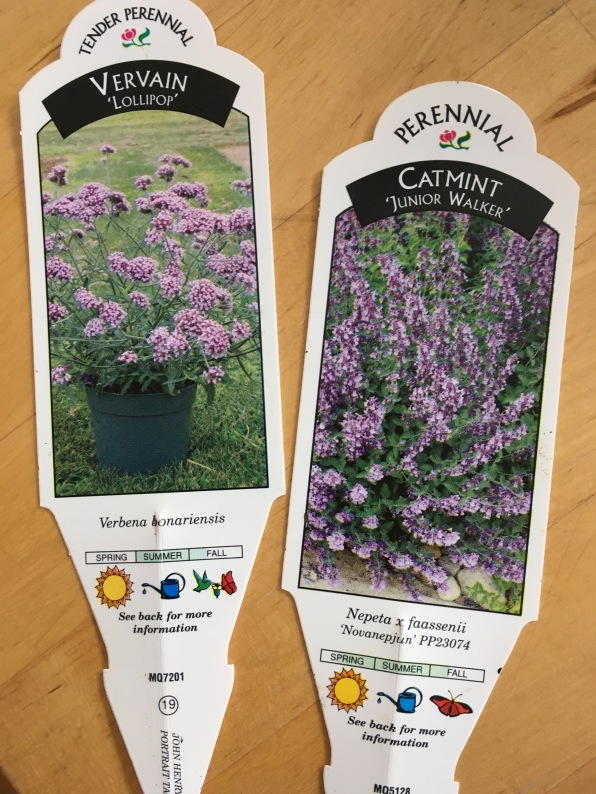 lollipop vervain and dwarf nepeta plant tags