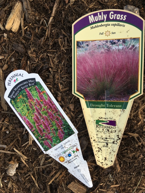 muhly and agastache plant tags