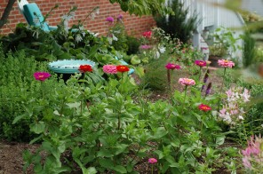 Zinnias out front