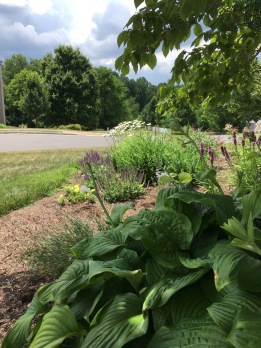 View to right from chair: hostas