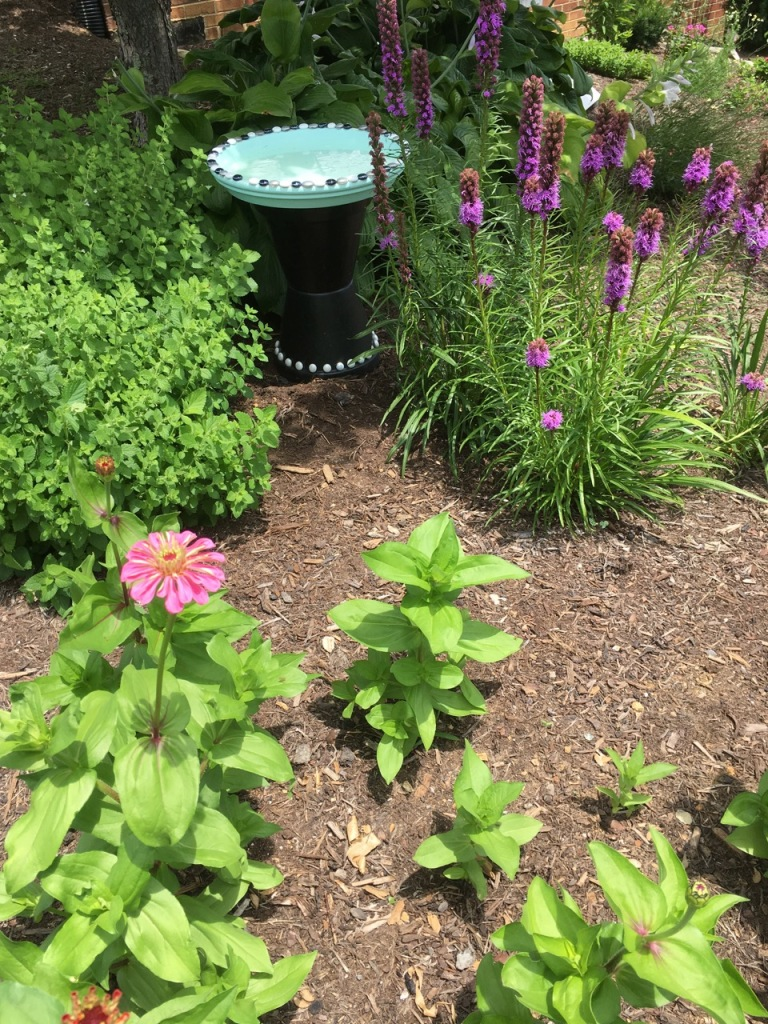 zinnias, liatris, bird bath