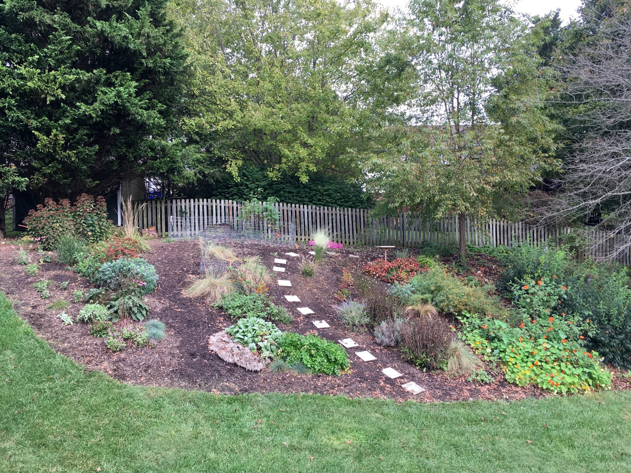 10 Oct back garden