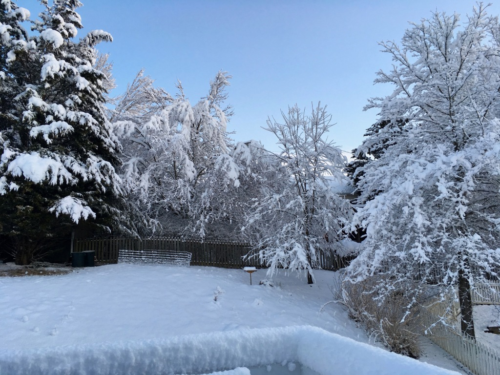 3 back garden in Mar 25 snow copy