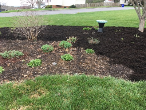 Front bed mulching in progress