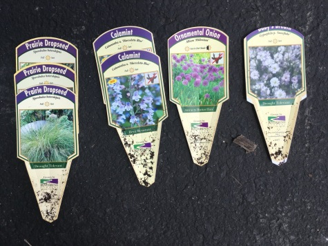 Tags for front bed plantings
