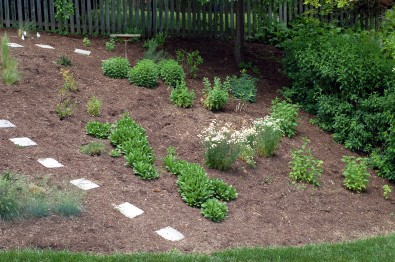 Butterfly garden - right back hill