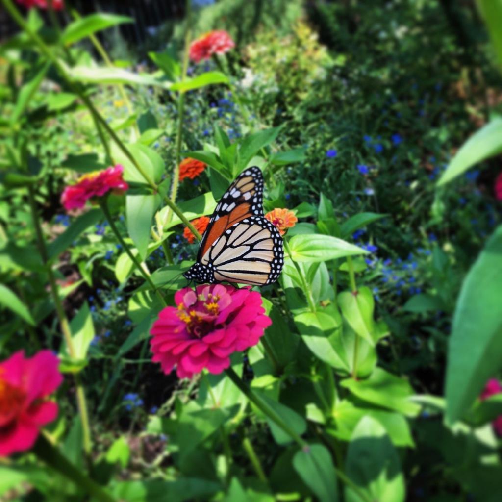monarch instagram_2049